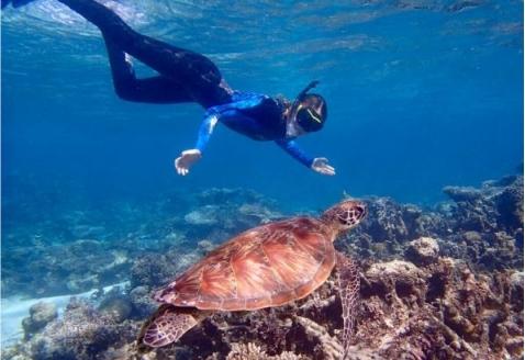 Australia_Ningaloo_reef_turtle_snorkel_680076226