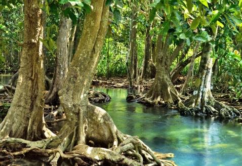 Sundarbans_mangrove-forest